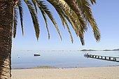 Palm tree, shore, Idyll, boat, jetty, lagoon and inland sea, Los Urrutias, Mar Menor, La Manga, Murcia, Spain, Europe