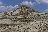 Plantations in the arid landscape near Fortuna, Murcia Region, Spain, Europe