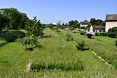 Orchard and meadow in an urban environment, Vieux-Charmont, Doubs, France