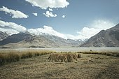 Sheaves of grain tied together and set up in a field, behind them the mountains of the Hindu Kush, Wakhan Corridor, Saradh-e-Broghil, Afghanistan, Asia