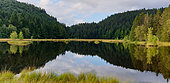 Peat bog lake of Lispach, Vosges, France