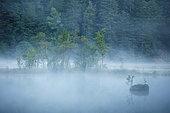 Morning mist on the peat bog lake of Lispach, Vosges, France