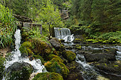 Spring of the Doubs, Jura, France
