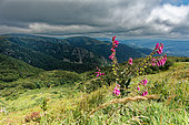 View from the Kastelberg, Vosges, France