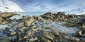 Ytresand shore in winter, Lofoten, Norway
