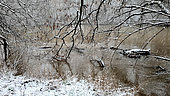 Secondary branch of the Loire in flood, under the snow, Loire Valley, France