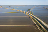 Flooded rice fields in May. Aerial view. Drone shot. Ebro Delta Nature Reserve, Tarragona province, Catalonia, Spain.