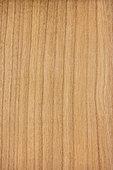 Longitudinal section of cherry wood (Prunus avium) synonyme : Sweet Cherry, Wild Cherry, European Cherry
