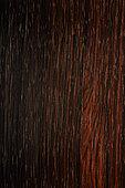 Longitudinal section of Brazilian rosewood (Dalbergia nigra) synonyme : Bahia Rosewood, Pianowood, Rio Rosewood, Brazil