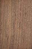 Longitudinal section of Black Walnut (Juglans nigra), Eastern North America