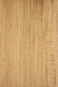 Longitudinal section of East Indian satinwood (Chloroxylon swietenia), synonyme : Ceylon satinwood, Eastern India
