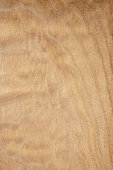 Longitudinal section of Quilted maple (Acer pseudoplatanus), Eastern Europe