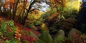 Autumn atmosphere in the forest of Huelgoat, Finistère, Brittany, France