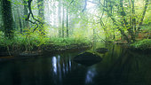 Silver River in Huelgoat forest in autumn, Finistère, Brittany, France