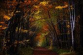 Forest path in autumn, Yonne, Burgundy, France