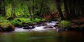 Bridier river at Saut de Gouloux, Nièvre, Morvan, France