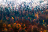 First snow on a mixed forest in autumn, Ilay, Jura, France