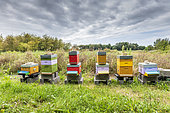 Beehives in a private garden in summer, Pas de Calais, France