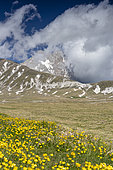 Mountain Landscape, view of the Corno Grande with flowers in the foreground, Abruzzo, Italy