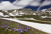 Mountain Landscape, view of mountain tops in Gran Sasso National Park with Crocus flowers in the foreground, Abruzzo, Italy