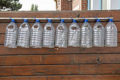 Plastic water bottles cut to protect young plantations in summer, Pas de Calais, France