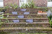 Abbé Pierre's message on the steps leading to the garden in summer, Pas de Calais, France