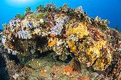 Coralligenous crevice, off Calella de Palafrugell, Costa Brava, Catalonia, Spain