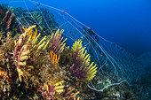 Abandoned net on the coralligenous, off Calella de Palafrugell, Costa Brava, Catalonia, Spain