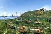 Seaweed culture experiment, foreground: Gracilaria, Clos de la Comète, Salins d'Aigues-Mortes, Bouches-du-Rhône, France.