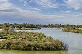 Camargue marshes, Pont-de-Gau ornithological park, Camargue, France
