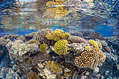 The fabulous biodiversity of the coral reefs of the southern pools. Coral reef of the southern pools of Mayotte.