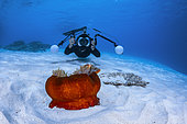Underwater photographer and Skunk Clownfish (Amphiprion akallopisos) on a red sea anemone on white sand, Mayotte