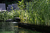Natural swimming pool, regeneration area with water plants, France