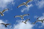 UK/England, Brighton. Brighton, seagulls