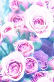 Numerous Pink Rose