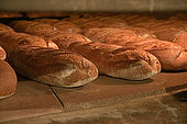 loaves inside the wood fired oven