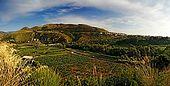 Santa Maria del Cedro - Calabria  campi di cedro