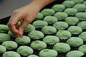Santa Maria del Cedro - Calabria  pasticceria Aronne preparazione dei dolci a lcedro