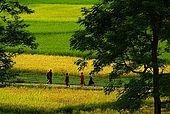Arakan, Vesali, rice fields