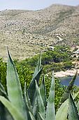 Croatia Lastovo Island Struga lighthouse - Mediterranean vegetation - The Skrivena luka (bay) in background.