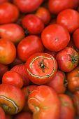 Croatia Lastovo Island Struga lighthouse - Tomatoes from the kitchen-garden.