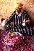 Maroc;Maroc;Atlas, Chaine de l'Atlas - Dades Valley, Rose Valley area, rose cultivator pouring tea