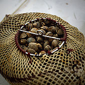 Bag of mussels, Lesvos, Greece