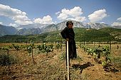 Mrs. Vita Peci looks after her son's vineyard while he works in Greece, just few kilometers far away, Iljare, Valley of Permet, Albania