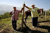 Mr. and Mrs. Gjika with their horse Ligio, Valley of Permet, Albania