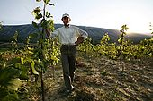 Mr. Kushtim Muho in his Debin vineyard, Suk, Albania