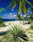 IN*Philippines, palmiers sur plage de sable blanc