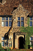 Kenya, region de Nairobi, le Manoir aux Girafes, ou Bryony and Rick Anderson veulent sauver un groupe de girafes de Rotschild