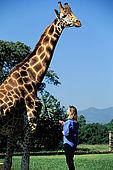 Kenya, region de Nairobi, le Manoir aux Girafes, ou Bryony et Rick Anderson veulent sauver un groupe de girafes de Rotschild. Uhuru, du haut de ses 4 metres... avec Bryony