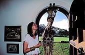 Kenya, region de Nairobi, le Manoir aux Girafes, ou Bryony et Rick Anderson veulent sauver un groupe de girafes de Rotschild. Bryony avec Daisy III, qui tente de s'introduire à l'intérieur du Manoir...